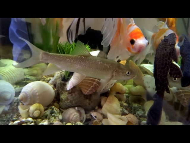 BEAUTIFUL COLLECTION FISH GOLDFISH FRESHWATER FISH AQUARIUM FISH TANK AQUARIUMS