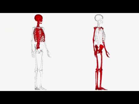 Dolore nel rene posteriore