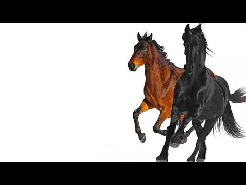 Lil Nas X Old Town Road (Remix) [feat. Billy Ray Cyrus] - Single