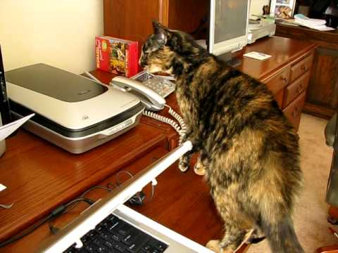 Cat vs. Printer: The War of the Ages