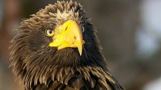 Why The Temperature of the Sea is Important for Sea Eagles