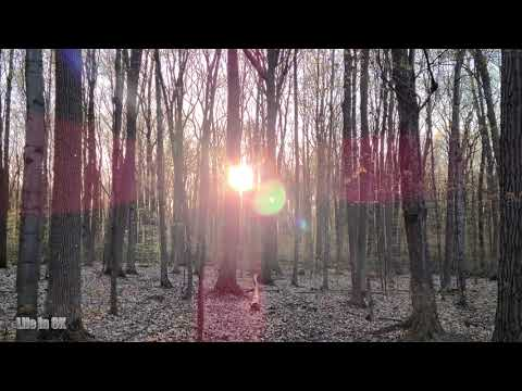 Life in 8K - A walk thru the early spring Canadian mixed forest...