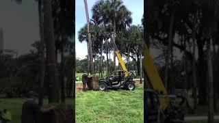 Transplanting Big Sabal Palms/The Tree Planters
