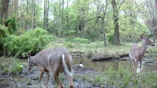 Bambi Brigade Meets Mama Goose