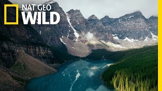 A Celebration of Wildlife and Nature | Symphony For Our World