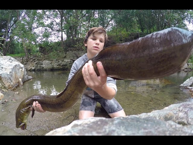 Catching The BIGGEST Freshwater EEL! (AMAZING)