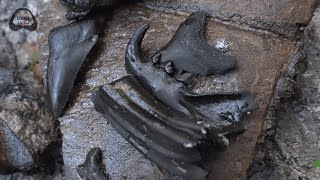 Rarest Discovery Of 2019 Found Fossil Hunting In Florida | Florida Fossil Hunting Episode 11