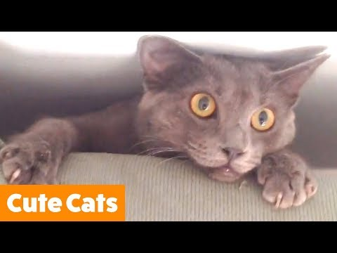 Best Cutest Cats | Funny Pet Videos