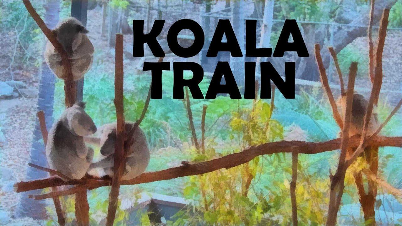 【ロンパイン・コアラ保護区】コアラの国オーストラリアでのコアラ達の様子