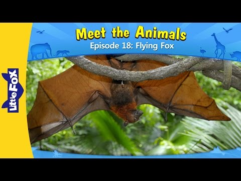 Download Meet The Animals 18 | Flying Fox | Wild Animals | Little Fox | Animated Stories For Kids HD Mp4 3GP Video and MP3