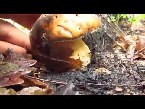 Trattamento di un fungo di unghie che stanno kreoliny