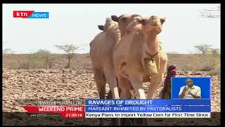 Drought Diaries: Drought situation continues to affect not only humans but also livestock population