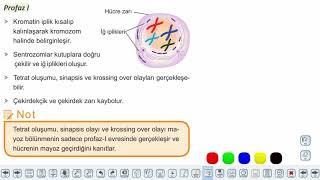 Eğitim Vadisi 10.Sınıf Biyoloji 4.Föy Hücre Bölünmeleri Mayoz Konu Anlatım Videoları