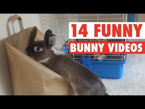 S králíky není nuda
