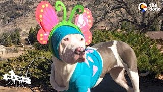 This Pittie Puppy Was Completely Transformed By Love   The Dodo Pittie Nation