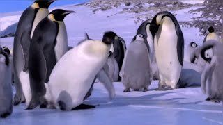 Penguin fails and funny moments!!