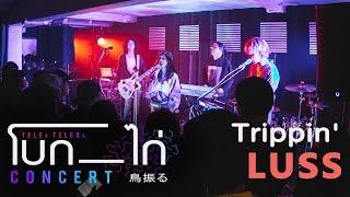 LUSS - Trippin (Live at TELEx TELEXs โบก-ไก่ Concert)
