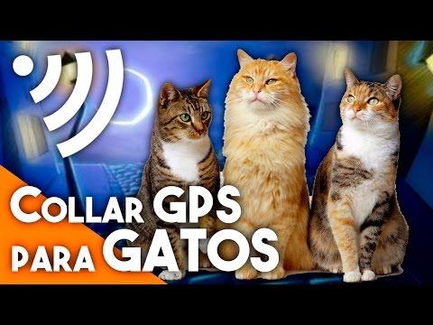 Collar GPS para gatos (con @Elnotaese) - La red de Mario