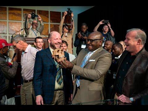 Homo naledi's young age revealed