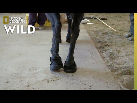 A Horse Gets Special Shoes | Heartland Docs, DVM