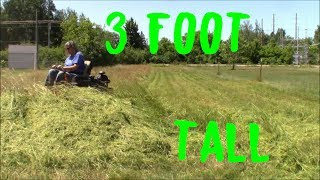 Mowing Down 3 Foot Tall Thick Grass (Satisfying)