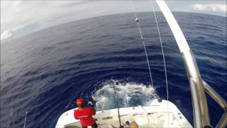 preview picture of video 'Bill fish fishing in Rodrigues 2014'