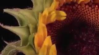 www.odia video.com happy new year 2018 all my fn