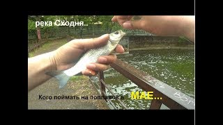 Р. сходня рыбалка