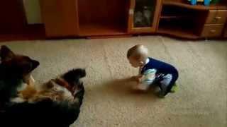 Малыш и овчарка. Сhild and sheep-dog