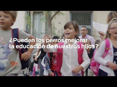 Imagen del vídeo Niños y mascotas en las escuelas - Resultados 2015/2016