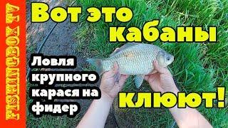 Отчет о рыбалке на дону в липецкой области