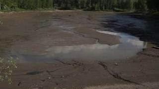 В Новосибирске браконьеры спустили воду в пруду РАН и забрали всю рыбу