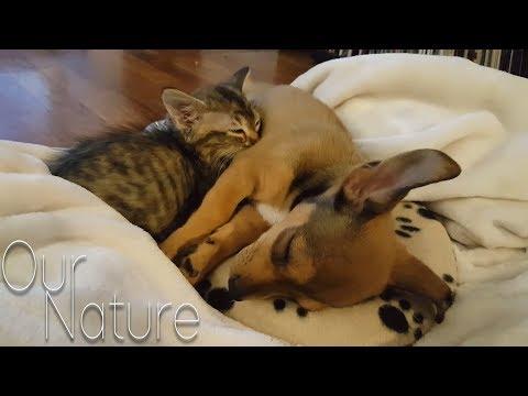 גורי כלבים פוגשים חתולים בפעם הראשונה