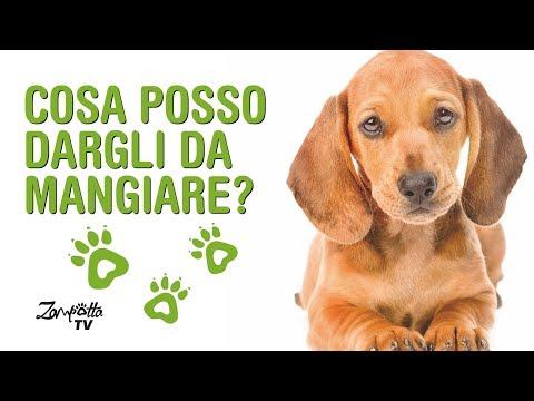 Cani di piccola taglia: cosa dar loro da mangiare...?