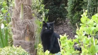Katze Mimi – Toben im Garten