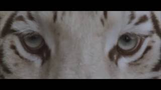 "Our Last Night - ""White Tiger"" (OFFICIAL)"