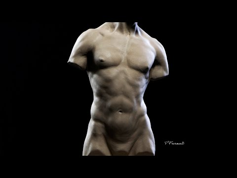 Sculpting a Torso