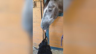 FUNNY HORSE and DOG CLIPS - THIS will MAKE your DAY