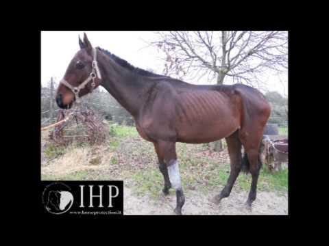 Vendo lattivatore di cavallo