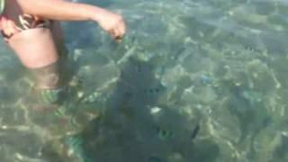 Израиль Эйлат / Рыбки Красного Моря