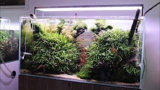 5 Tips for Establishing a New Aquascape or Planted Aquarium