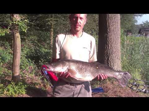 Ryby, rybky, rybičky – 17/2014, premiéra 15.8.2014