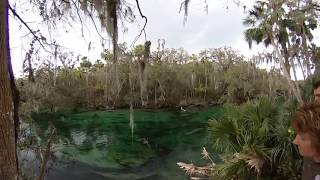 Watch endangered baby florida manatees swim by in 360 VR