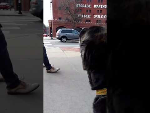 AMAZING Dog Howling Like A Wolf At Ambulance WILDBOY