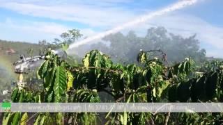 Tưới phun mưa cho vườn cà phê bằng súng tưới Ducar Atom 35