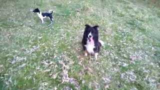 Dog language. see description.....