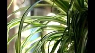 Talking Plants Using Twitter thumbnail