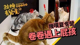 Cat's friends come for summer! (PART II)|LAMUNCATS ♧