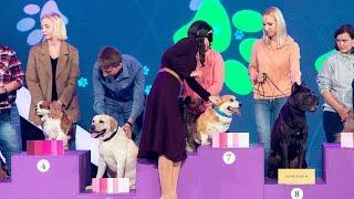 «Удивительные люди». Ирина Корх. Тактильное определение породы собак