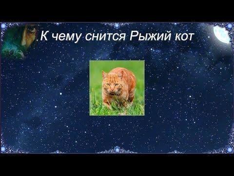 К чему снится Рыжий кот (Сонник)